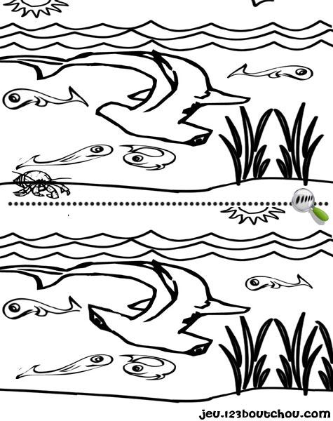7 différences enfant fiche 7 différences animaux / requin
