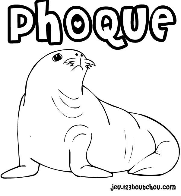 Dessin de phoque - Coloriage de phoque ...
