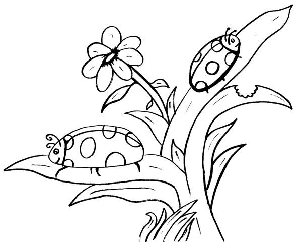 dessin fleur papillon et le petit martien