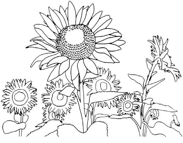 Coloriage Printemps Gratuit.Coloriage De Fleur Rose Et Fete Printemps Pour Enfants A
