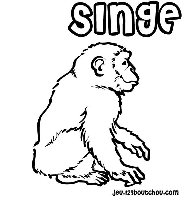Singe coloriage - Coloriage petit singe ...