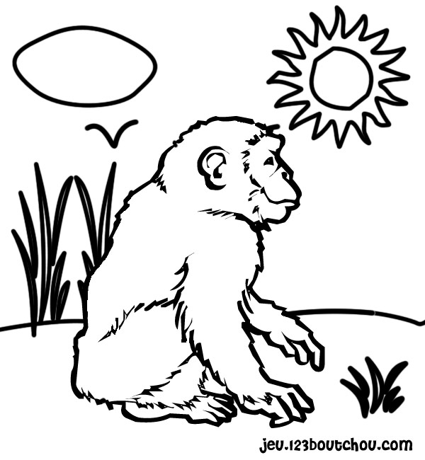 Boulou l 39 cole - Coloriage petit singe ...